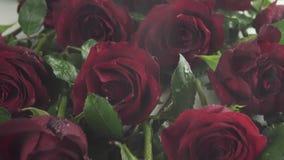Regn på bakgrund av röda rosor med video för längd i fot räknat för materiel för vattendroppultrarapid lager videofilmer
