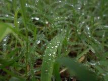 Regn på den gröna gräsmattan fotografering för bildbyråer