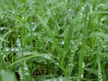Regn på det gröna gräset arkivfoton