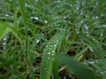 Regn på ett grönt grässtrå arkivfoto