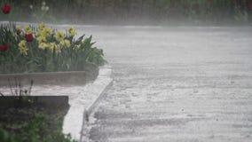 Regn som hårt faller i, parkerar stock video