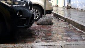 Regn som plattering på kullersten förutom parkerade bilar stock video