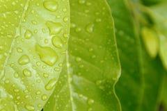 Regn som tappas på bladet royaltyfri foto