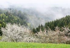 regn Spring Valley Royaltyfria Bilder