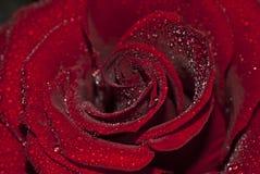 regn steg Royaltyfria Bilder
