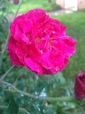regn steg Royaltyfri Bild