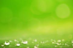 Regn tappar över ny grön bladtextur, naturlig bakgrund Royaltyfri Fotografi