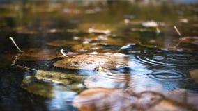 Regn tappar att falla på pölen med höstsidor stock video