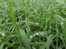 Regn tappar på ett fält av grönt gräs royaltyfri fotografi