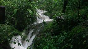 Regna i djungeln stock video