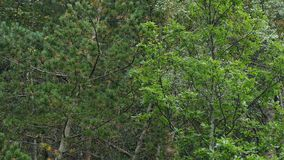 Regna i skogen