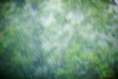 Regna i skogen, den naturliga bakgrunden och textur abstrakt begrepp suddighet bild Arkivfoton