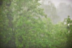 Regna i skogen, den naturliga bakgrunden och textur abstrakt begrepp suddighet bild Royaltyfri Foto