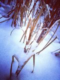 Regna i snön fotografering för bildbyråer