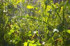 Regna i trädgården Royaltyfri Foto