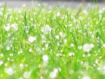 Regna liten droppe på gräs Royaltyfri Foto