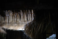 Regna på bambukoja Royaltyfri Foto