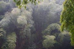 Regna på bambuskogen Arkivfoton