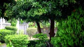 Regna på växter och träd med suddig bakgrund arkivfilmer