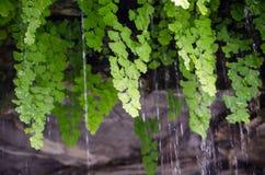 Regna tanke lämnar gräsplanen i en Australien regnskog arkivfoto