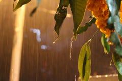 Regna tappar Fotografering för Bildbyråer
