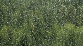 Regna tappar på ett fönster Royaltyfri Foto