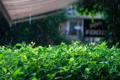 Regna utomhus- Arkivfoto