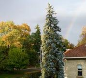 Regnbågar och blå gran Royaltyfria Bilder