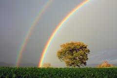 Regnbågar och ek, Wales Royaltyfria Bilder