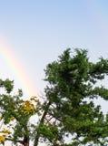 Regnbåge över ett träd Royaltyfri Bild
