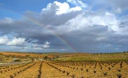 Regnbåge över fält av vinrankor och oliv royaltyfri fotografi