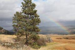 Regnbåge över Montana Ranch i höst Arkivbild