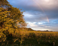 Regnbåge över Palo Verde National Park i Costa Rica Royaltyfri Fotografi