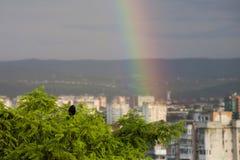 Regnbåge, fantastisk sikt efter regn och en kräva Royaltyfria Bilder