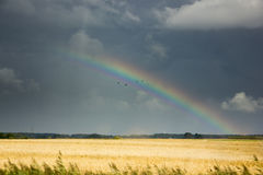 Regnbåge i ett guld- vetefält Arkivbilder