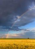 Regnbåge i jordbruks- fält med ensamhetträdet Arkivfoto