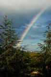Regnbåge och granarna Arkivfoto