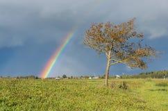 Regnbåge och träd Fotografering för Bildbyråer