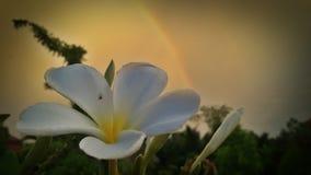 Regnbåge på en blomma Arkivfoton