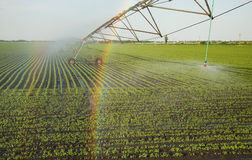 Regnbåge på sprinkleranläggningen Arkivfoto
