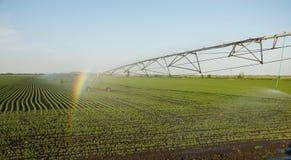 Regnbåge på sprinkleranläggningen Arkivbilder