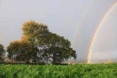 Regnbåge, träd och fält Royaltyfria Bilder