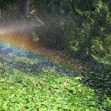 Regnbåge under regn i trädgård i solig höstdag Royaltyfri Bild