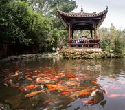 Regnbågefisk i det kinesiska dammet Arkivbild