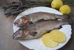 Regnbågeforell med citroner på den vita maträtten Royaltyfri Foto