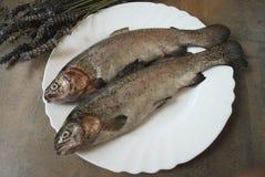 Regnbågeforell på den vita maträtten Royaltyfri Foto