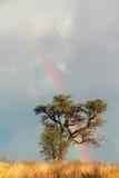 Regnbågelandskap Arkivbilder