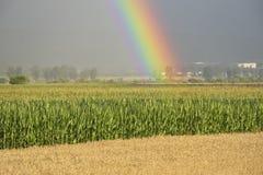 Regnbågen över ett fält under sommar Royaltyfri Foto