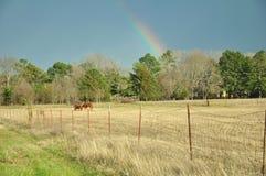 Regnbågen över lantgård betar Arkivfoto