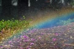 Regnbågen vid vattenspridaren i stads- parkerar royaltyfri bild